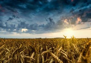Dugoročna vizija ruralnih područja EU – povratak korijenima?
